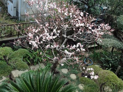 2012 03 19_0925-001.jpg