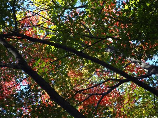 公園の紅葉も色づいてきた