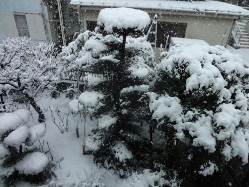 2階から見たお庭