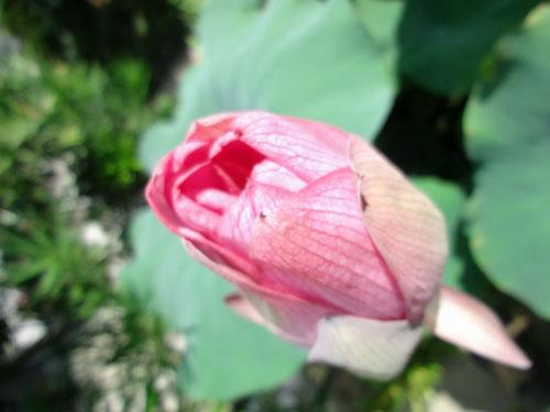 2012 07 19_2075-001.jpg
